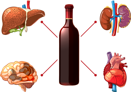 How Alcohol May Be Damaging to Your Body - alcohol effects on organs - waypoint recovery center