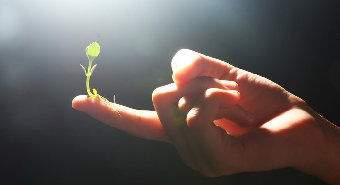 Adopting-a-Growth-Mindset-for-Addiction-Recovery - seedling on finger
