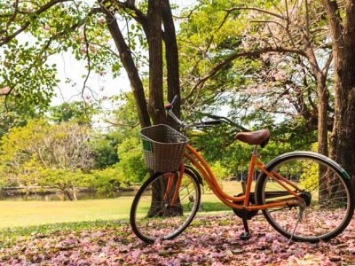 bicycle parked under blooming tree
