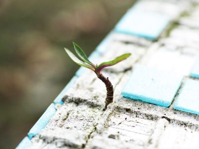 tiny tree growing in crack of tile - trauma